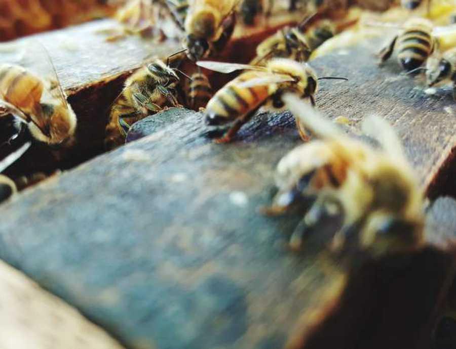 Nood aan Europees verbod op onkruidverdelgers voor particulieren